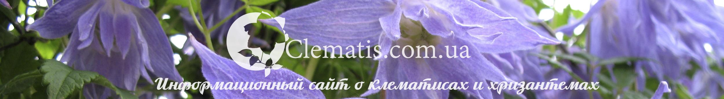 Clematis-Lozinka